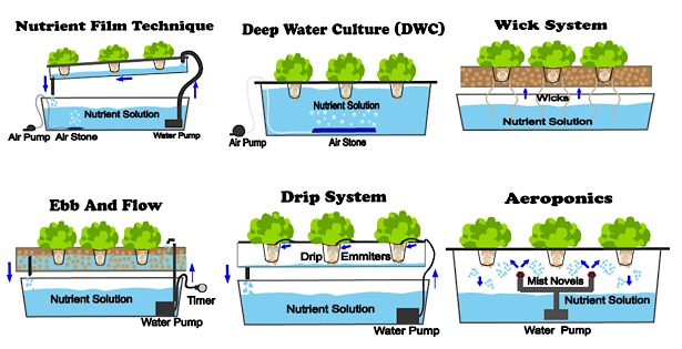 6 Different Types Of Hydroponic Systems Nosoilsolutions