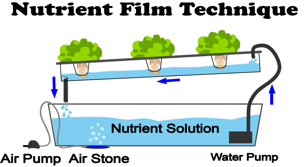 What Is Nutrient Film Technique Nft Hydroponics