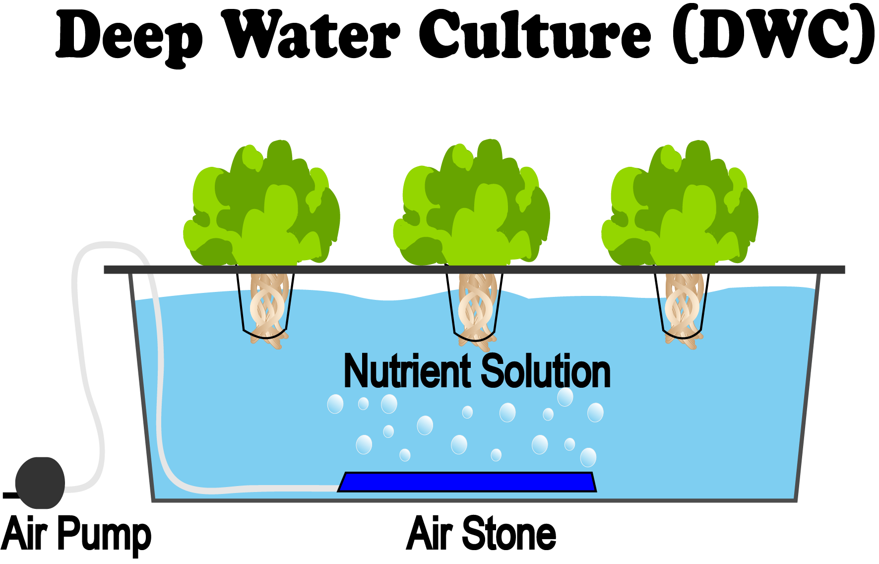 What Is Deep Water Culture Dwc Hydroponics Nosoilsolutions