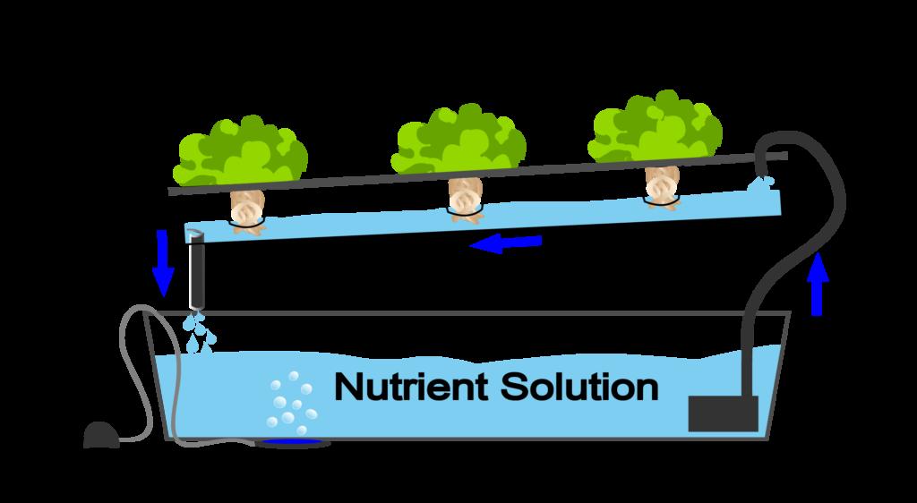 What Is Nutrient Film Technique