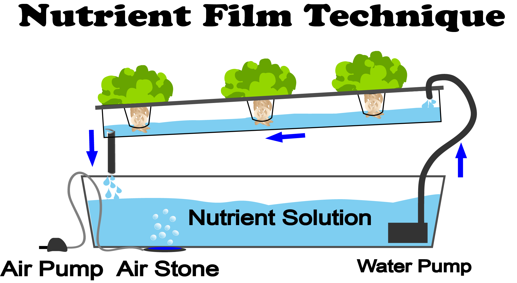 This is a diagram of a Nutrient Film Technique (NFT) Hydroponic system
