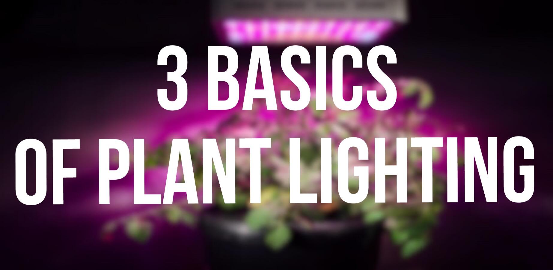 3 Basics Of Plant Lighting