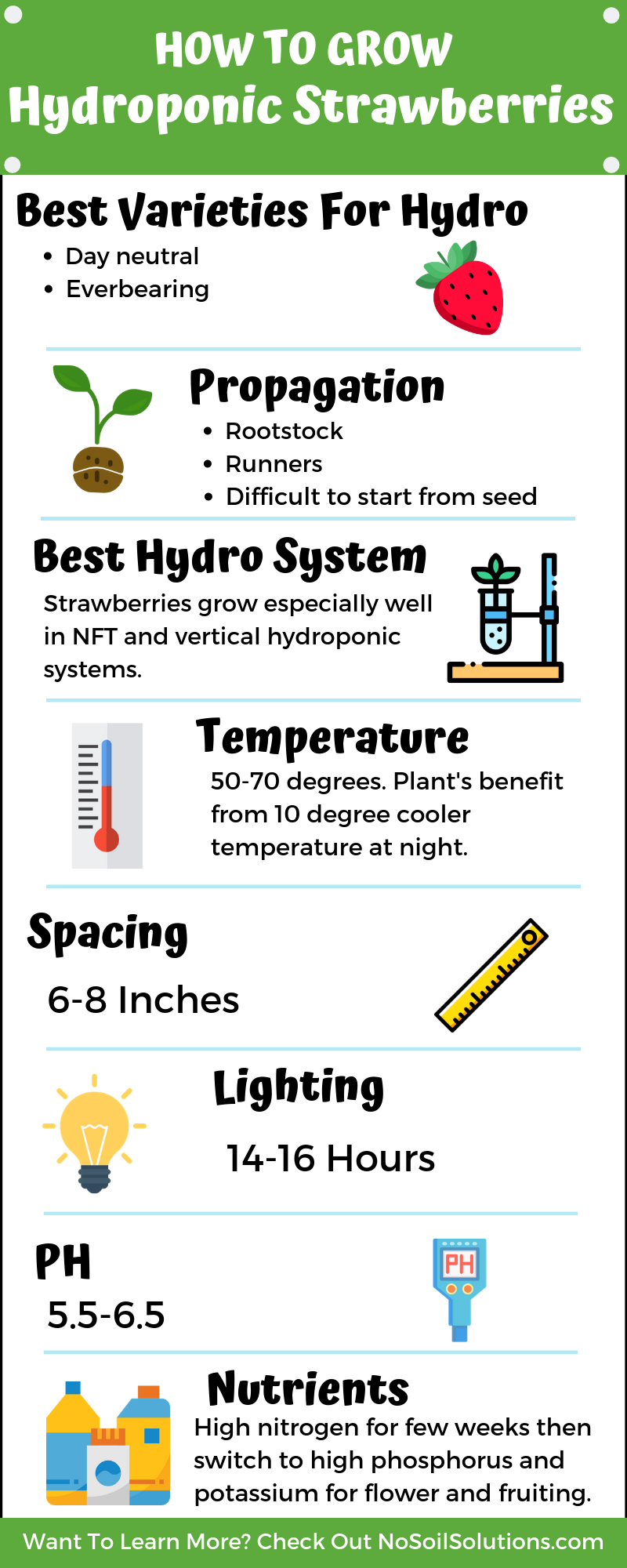 How To Grow Hydroponic Strawberries Infographic