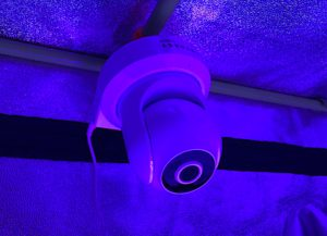 ip camera in hydroponic grow tent