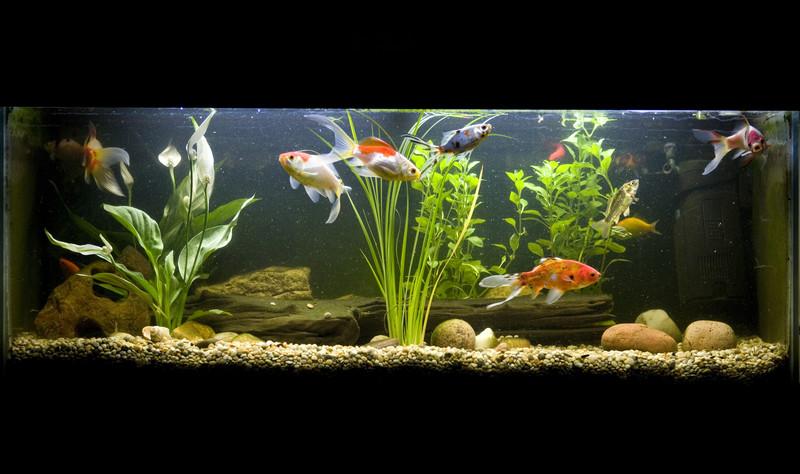 countertop aquaponic garden system